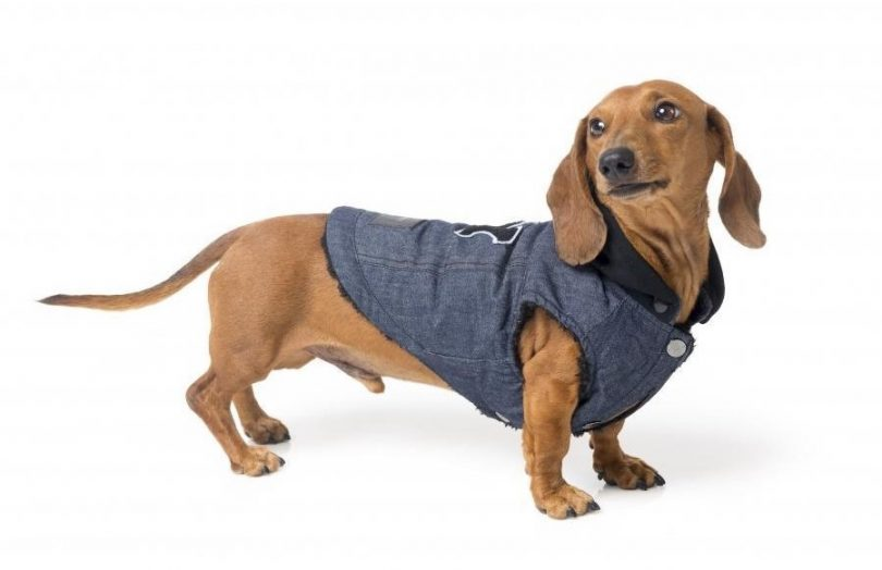 fuzzyard coats and jackets