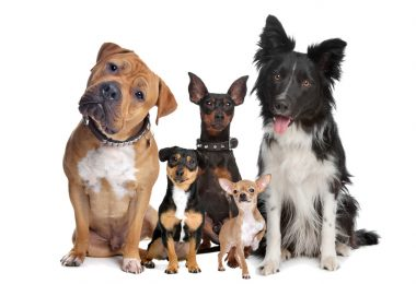 most popular dog breeds