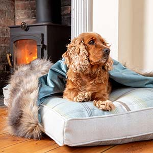 Luxury Dog Beds Chelsea Dogs