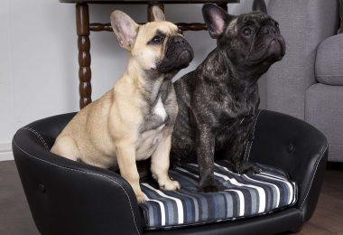 scruffs black leather dog sofa