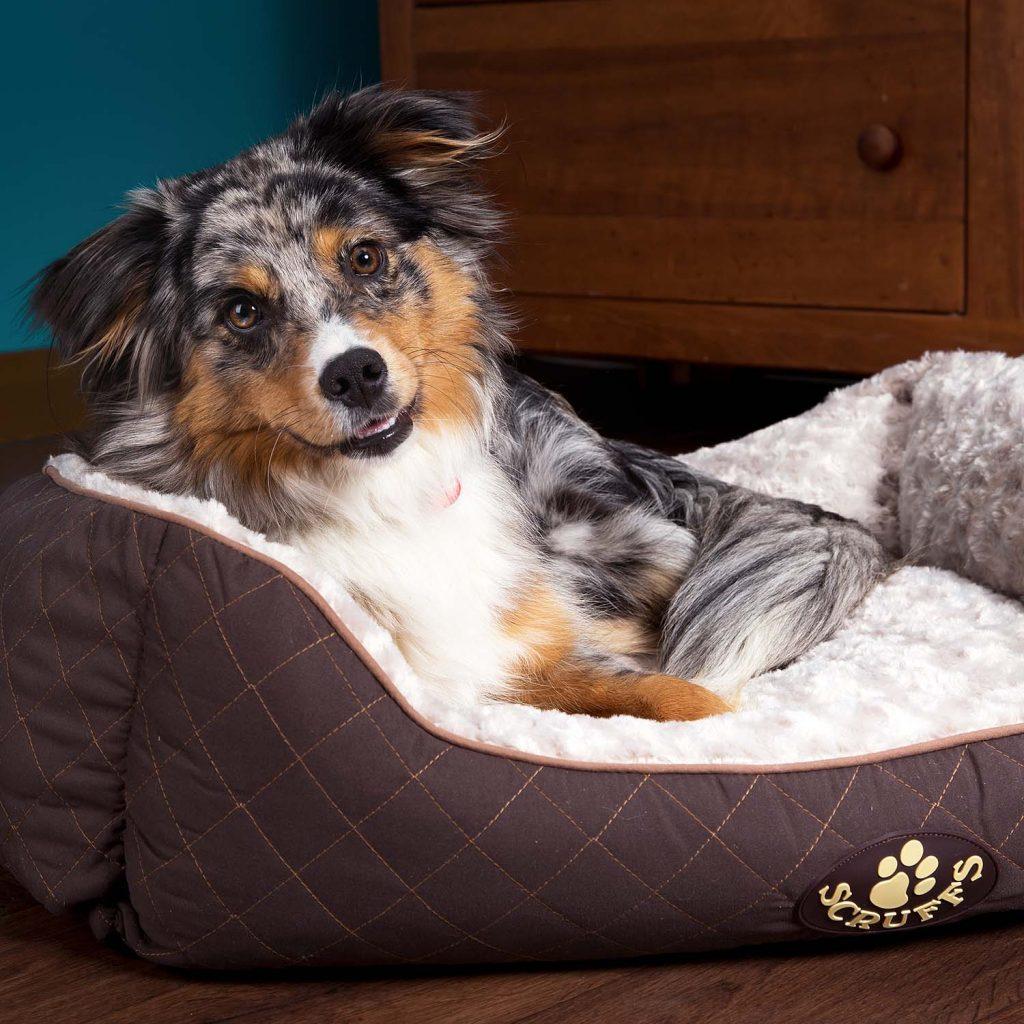 Wilton Brown Dog Bed Scruffs