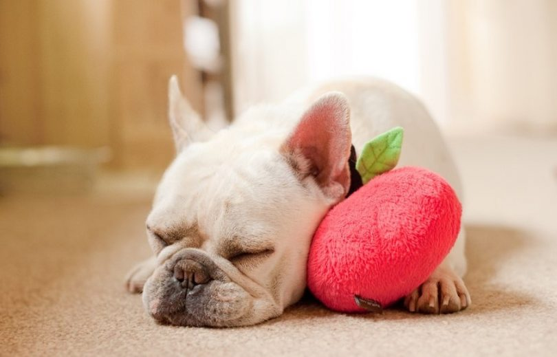 fun food shaped dog toys