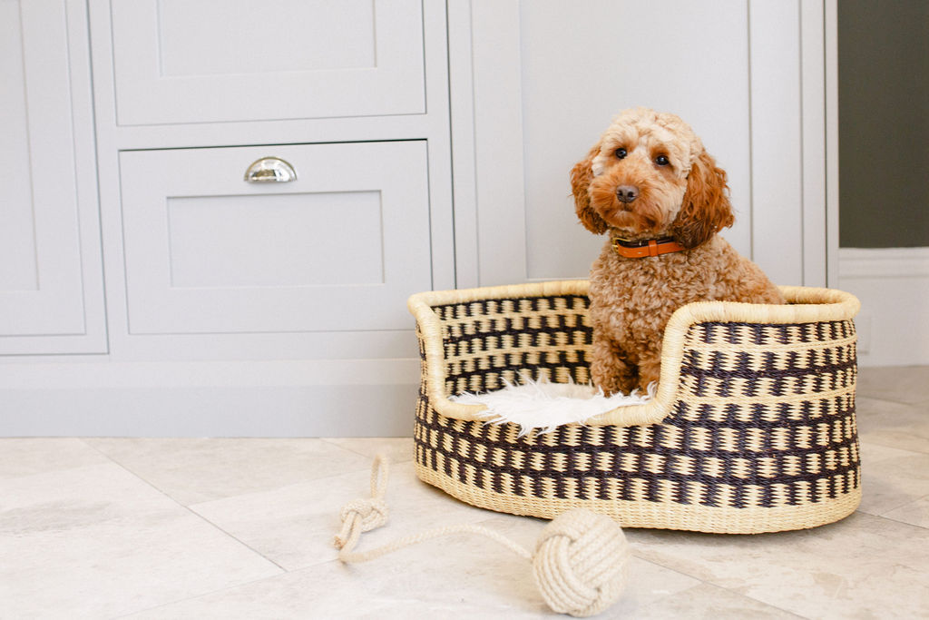 Why You Need Luxury Dog Products for your Best Friend