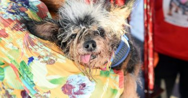 worlds ugliest dog