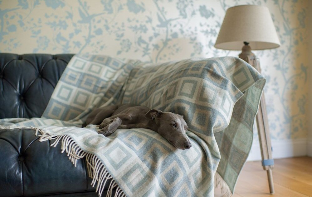 dog beds for summer pure merino wool throw