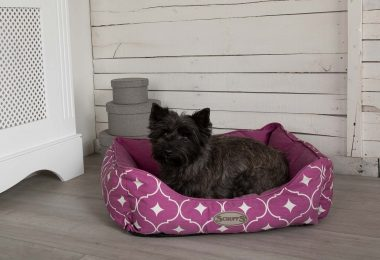 scruffs casablanca box bed pruple