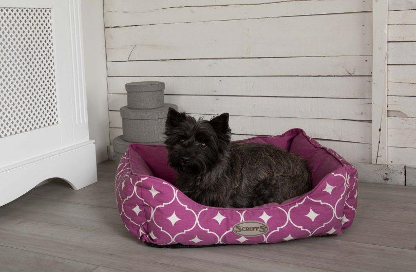 scruffs casablanca box bed pruple