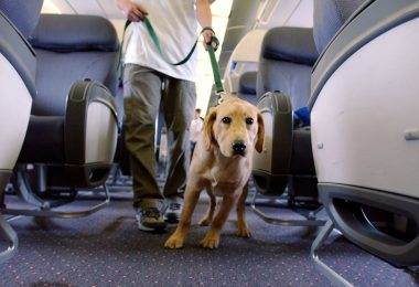 which airlines allow dogs on cabin