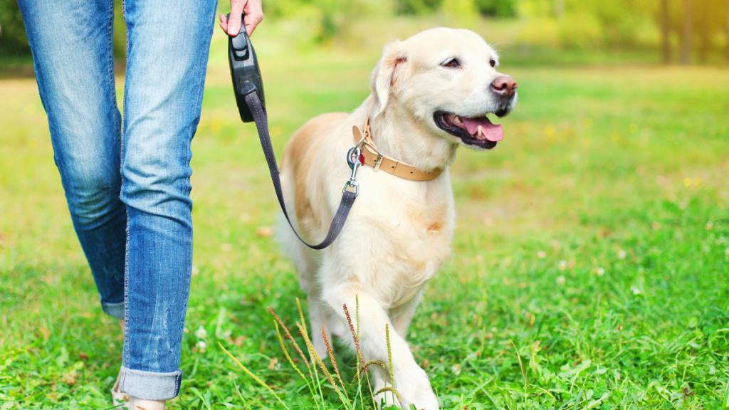dog walking in fields