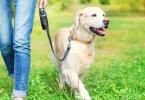 dog walking fields