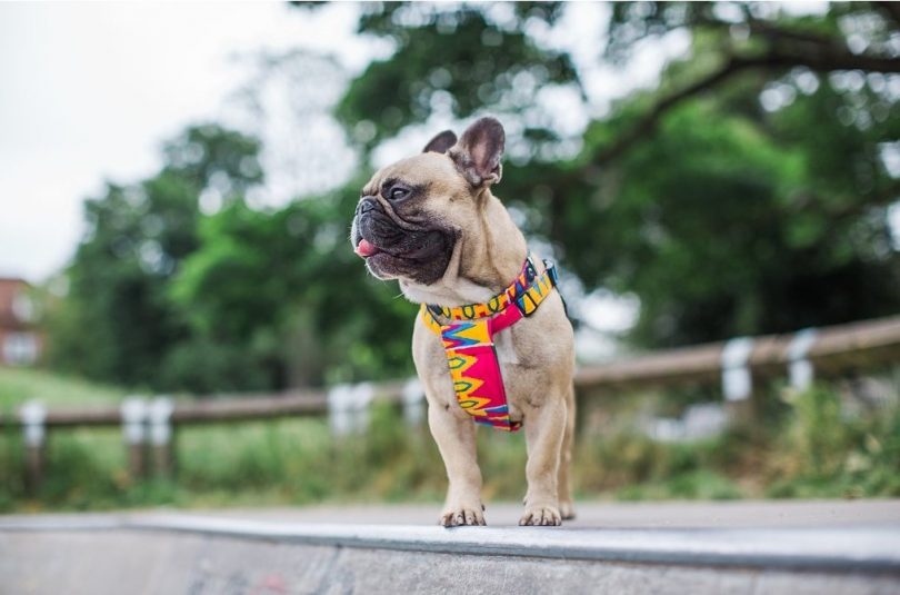 summer accessories for your dog