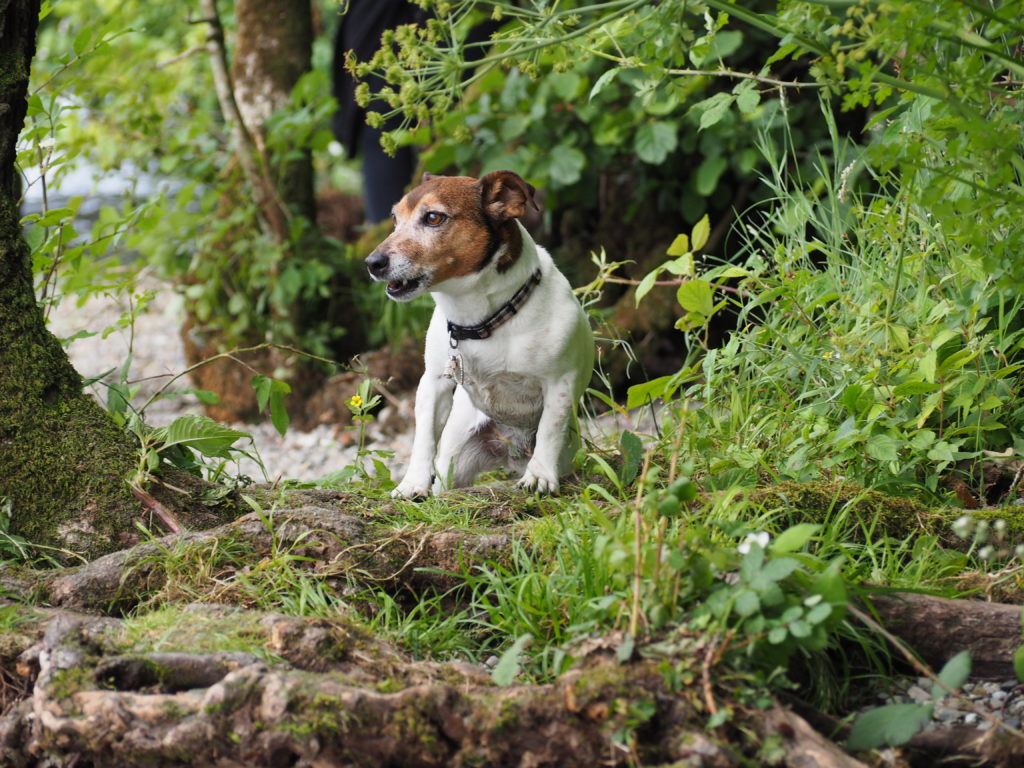 Dog stood on tree roots