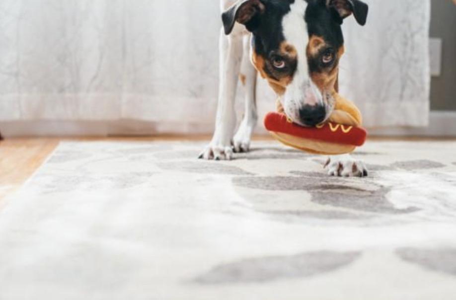 Hot dog toy