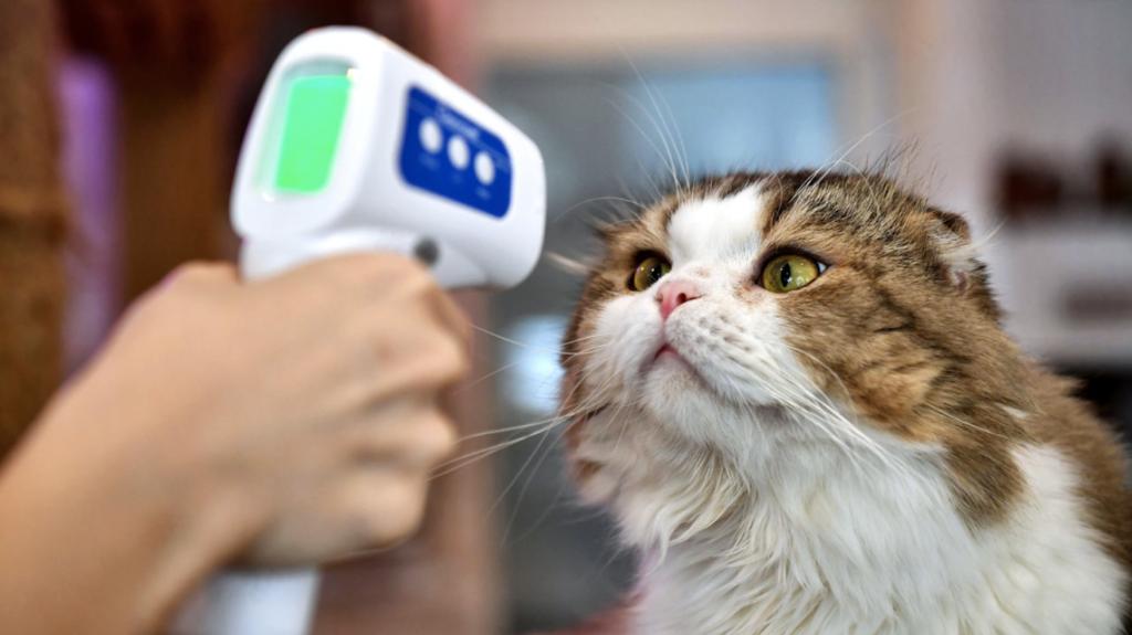 Cat having temperature taken