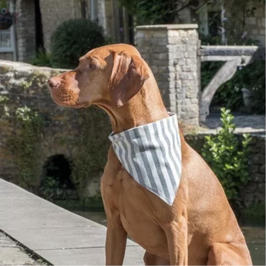 Mutts and Hounds dog bandana