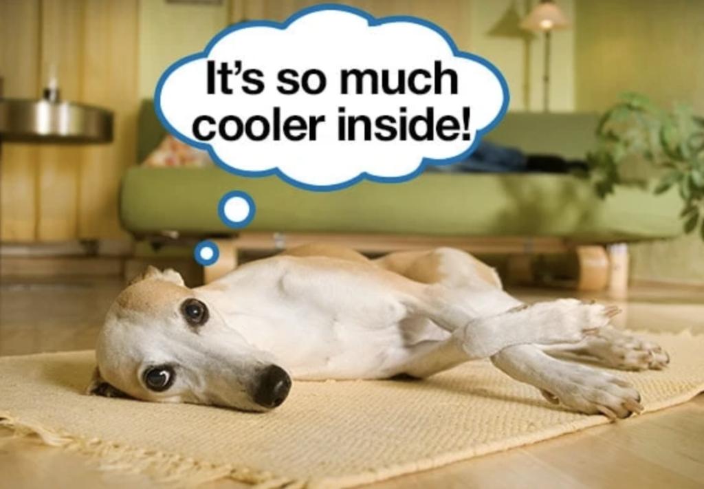 Dog cooling down inside