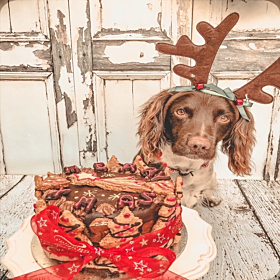Luxury Christmas Cake For Dogs by Molly's Patisserie