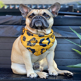 Mustard Leopard Dog Bandana | Pet Pooch Boutique