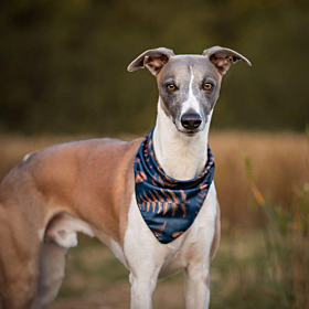 Acorn Dog Bandana | Pet Pooch Boutique