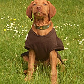 Freckles Microfibre Dog Drying Coat