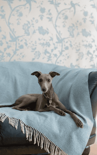Luxury Home Accessories For You and Your Dog