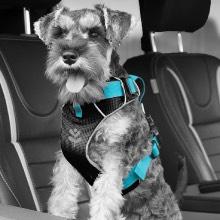 Car Dog Harnessess