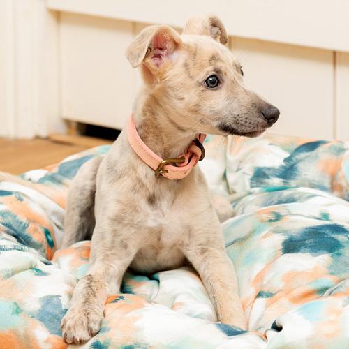 Designer Puppy Collars Luxury Puppy Collars