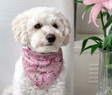 Designer Dog Neckerchiefs Luxury Bandanas For Dogs