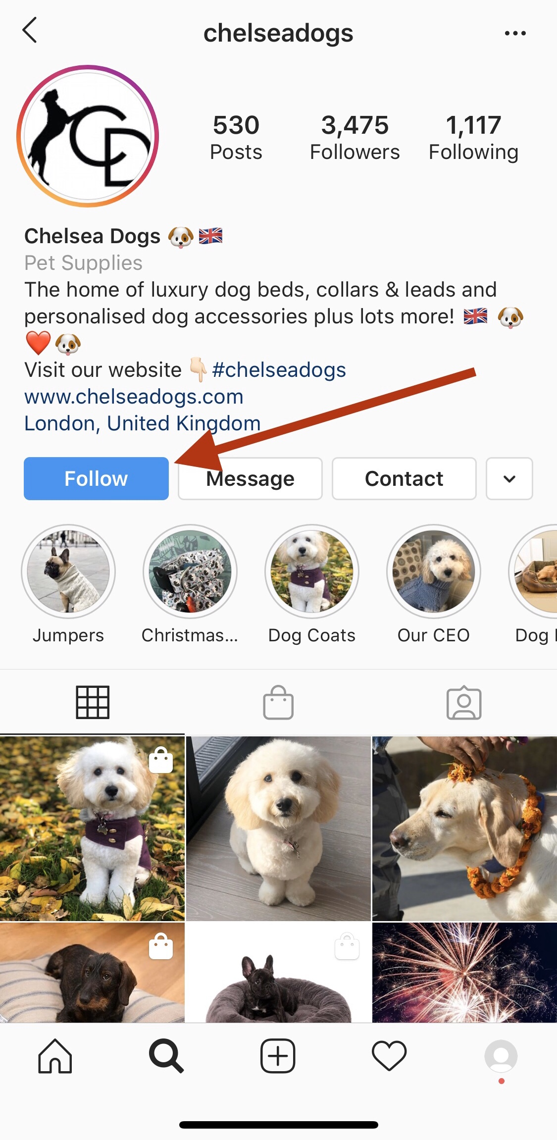Chelsea Dogs on Instagram