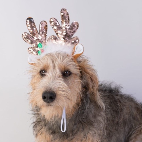 Christmas Clothing and Outfits For Dogs