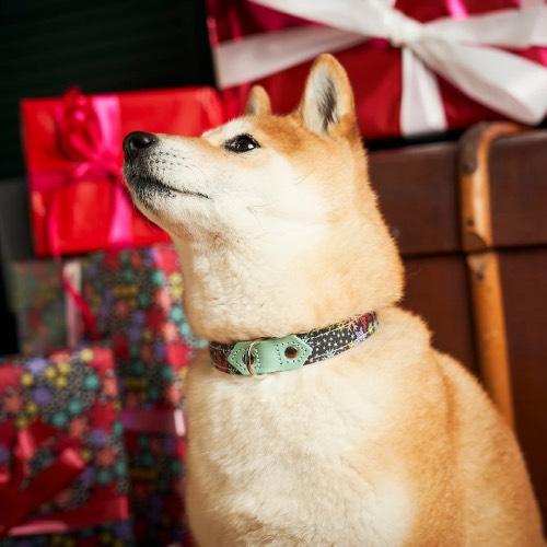 Christmas Dog Collars and Bandanas