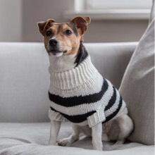 Luxury Puppy Jumpers, Luxury Puppy Sweaters