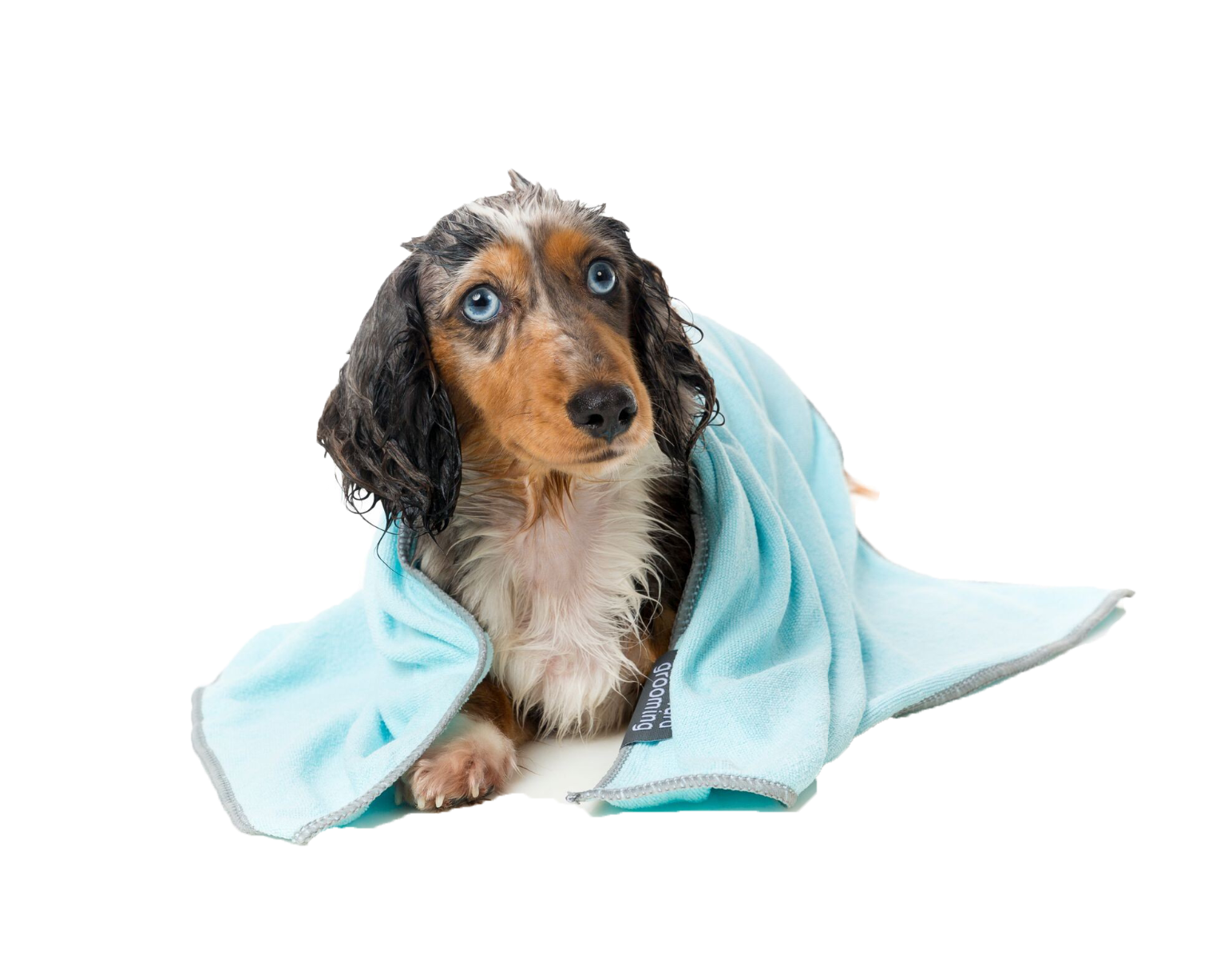 Luxury Dog Towels and Personalised Pet Towels