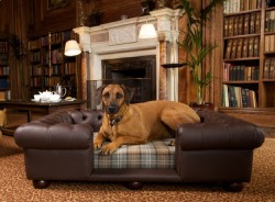 Dog Chesterfields, Chesterfields for Dogs, Chesterfields Dog Sofas
