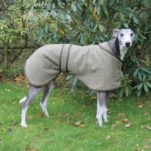 Greyhound and Whippet Coats