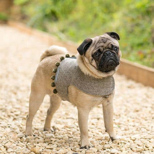 Luxury Dog Harnesses For Stylish Dogs