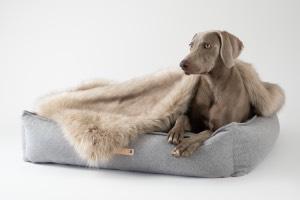 Luxury Dog Beds at Chelsea Dogs UK