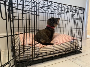 Luxury Dog Crate Starter Sets at Chelsea Dogs