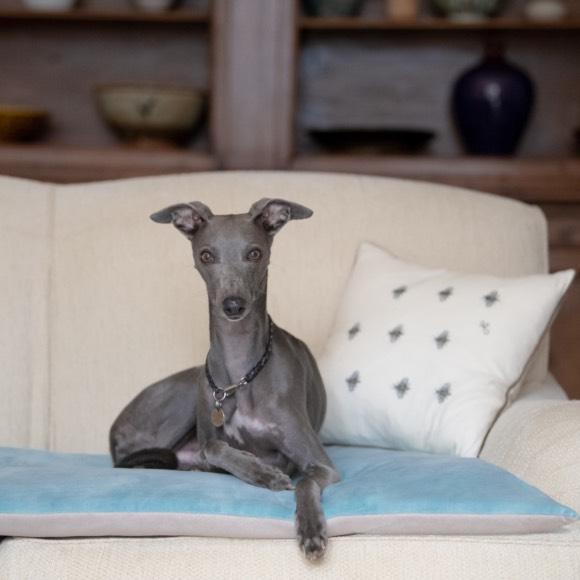 Luxury Dog Sofa Throws, Luxury Faux Fur Dog Blankets