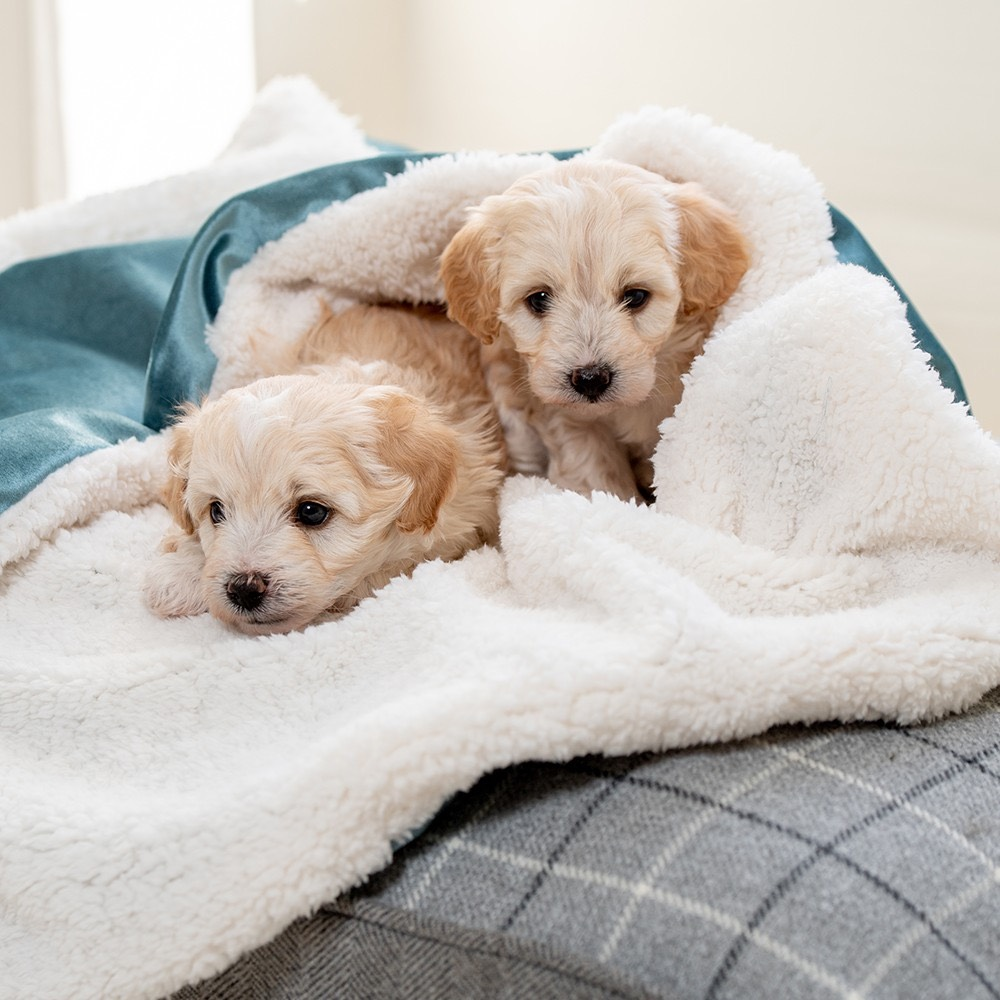 Luxury Puppy Blankets Faux Fur Puppy Blankets and Sofa Throws