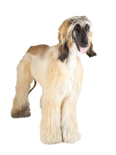 Afghan Hound - Beds, Collars and Accessories